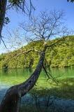 森林的反射在湖` s水的在Plitvice湖 库存照片