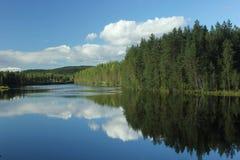 森林的反射 免版税库存图片