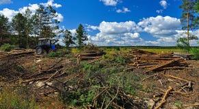 森林的大砍伐在地面上砍树说谎在天空蔚蓝的背景的拖拉机旁边 图库摄影
