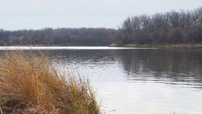森林的岸的Autumn湖在一阴天 股票视频