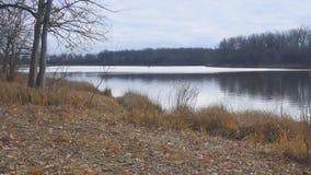 森林的岸的Autumn湖在一阴天 影视素材