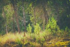 森林的抽象秋季梦想的图象日落光的 库存图片