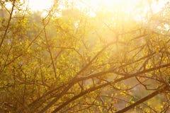 森林的抽象秋季梦想的图象日落光的 免版税库存照片