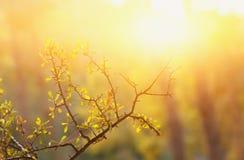 森林的抽象秋季梦想的图象日落光的 免版税库存图片
