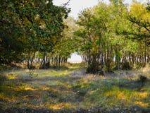 森林的摄影秋天时间的与在地面上的叶子 库存照片