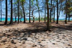 森林的本质在海附近的 免版税库存图片