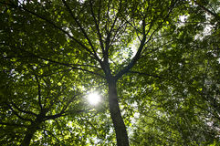 森林的植物 免版税库存照片