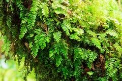 森林的正直 库存图片