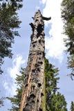 森林的母亲 库存图片