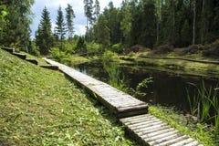 森林的池塘 免版税库存照片