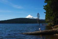 森林的湖,俄勒冈 库存图片