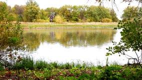 森林的湖 影视素材