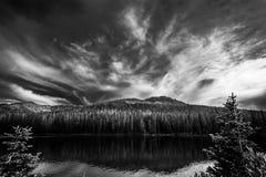 森林的湖 免版税库存图片