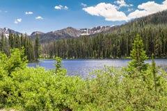 森林的湖 库存照片