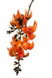 森林的火焰 免版税库存照片