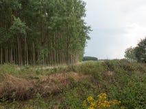 森林的看法从河岸的 库存图片