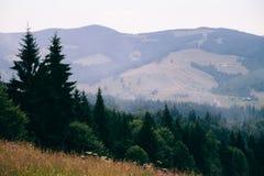 森林的看法喀尔巴阡山脉的 倾斜山和美丽的景色 图库摄影