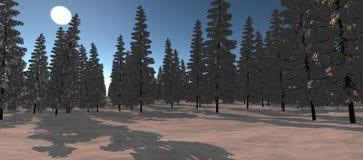 森林的看法有许多的在冬时的云杉 免版税图库摄影