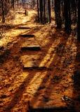 森林的秋天 免版税库存图片