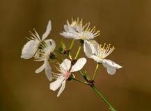 森林的第一朵花 免版税库存照片