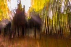 森林的精神 库存图片