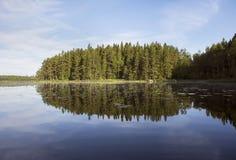森林的美好的反射在湖在夏天 库存图片