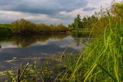 森林的美好的风景 免版税图库摄影