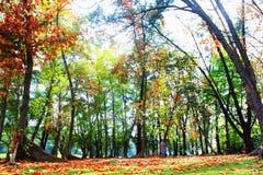 森林的荣耀 免版税库存图片