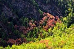 森林的西藏颜色 免版税库存图片