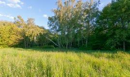 森林的边缘的新鲜的绿色草坪在搅动他们的叶子的桦树附近一个小树丛的在下 免版税库存照片