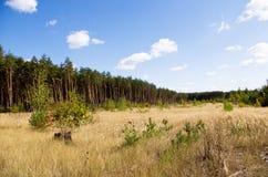 森林的边缘 免版税库存图片