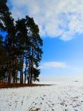 森林的边缘 免版税库存照片