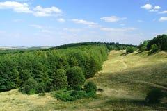 森林的边缘 库存照片
