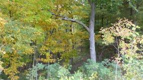 森林的边缘 库存图片