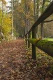 森林的道路 库存图片