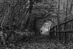 森林的道路 库存照片