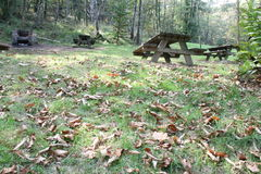 森林的野餐区 库存图片
