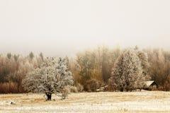 森林的非常美丽的景色在一个冷的冬天 图库摄影
