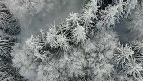 森林的鸟瞰图在冬天 股票录像