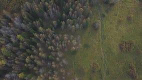 森林的鸟瞰图在秋天晚上期间下,云彩的  夹子 森林区域的顶视图在秋天 影视素材