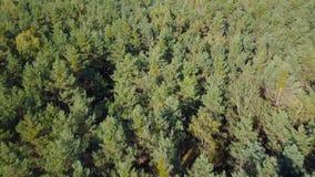 森林的鸟瞰图 股票录像