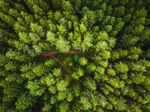 森林的鸟瞰图 免版税图库摄影