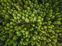 森林的鸟瞰图 免版税库存图片