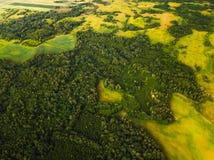 森林的鸟瞰图 库存照片