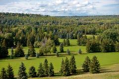森林的鸟瞰图 库存图片