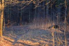 森林的阴影 免版税库存图片