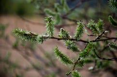 从森林的细节 免版税图库摄影