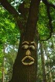 森林监护人 库存图片