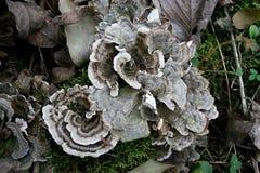 森林真菌 库存照片