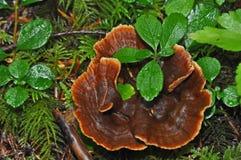 森林真菌 免版税库存图片